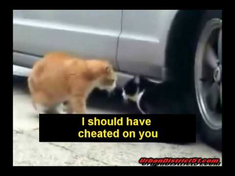 Funny Cats Cussing
