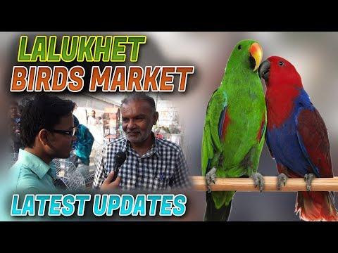 Lalukhet Sunday birds Market 28-Jan -2018 macaw african grey Eclectus Australian parrots for sale