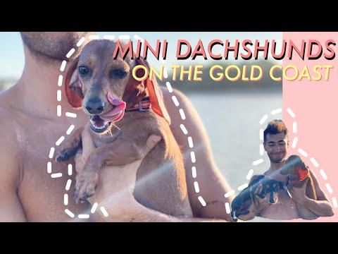 Mini Dachshunds on the Gold Coast | REMI AND MIA 2021