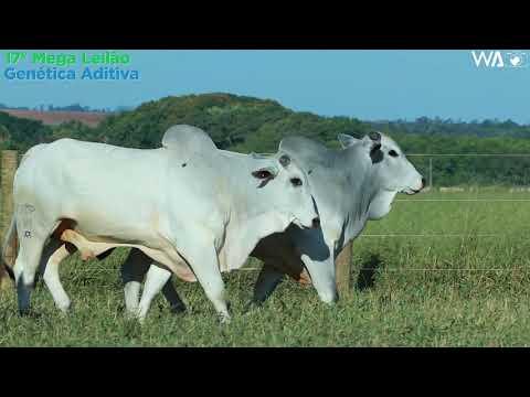 LOTE 166 - DUPLO - REMC A 2108, REMP 614 - 17º Mega Leilão Genética Aditiva 2020