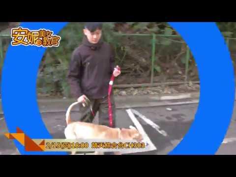 中華電信MOD〔靖天綜合臺〕安妮美女教官 - YouTube