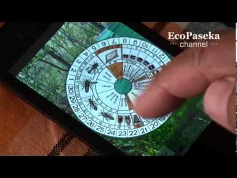 Символы пчеловодства: сапетка или виртуальный календарь?