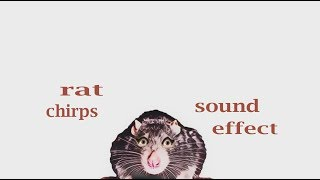 The Animal Sounds: Rat Chirps - Sound Effect - Animation