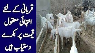 Is video mn hm apko qurbani goat ki price bataen ge thanks goats for sale, price, 2017, bulbulay drama qurbani, pregna...
