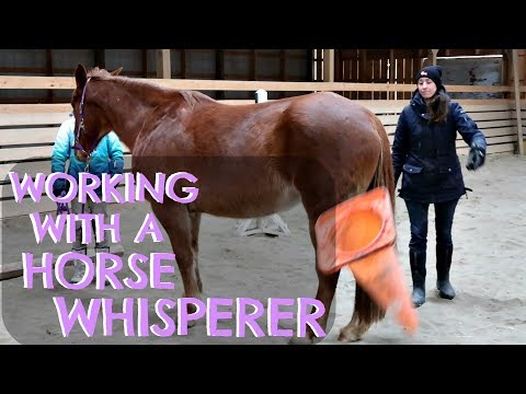 TRYING NATURAL HORSEMANSHIP WITH A LEADING HORSE WHISPERER! Day 034 (02/03/18)