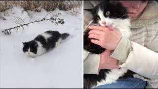 Cat Found in Snow is So Happy To be Saved She Can't Stop Thanking Her Rescuers