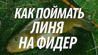 РЫБА ЛИНЬ - ЛОВЛЯ ЛИНЯ НА ФИДЕР