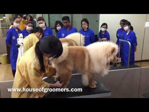 House of Groomers - Chow Chow