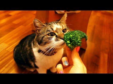 Can Cats Eat Broccoli Leaves