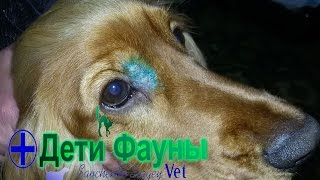 Рыбий жир / Витамины для собак / Клещи /Автор ветеринар
