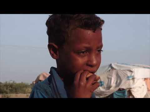 Stop the war on children: UNICEF's appeal on the children of Yemen