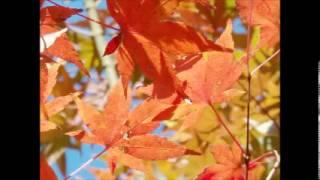 ヴィヴァルディ 「四季」より「秋」 高音質 FULL