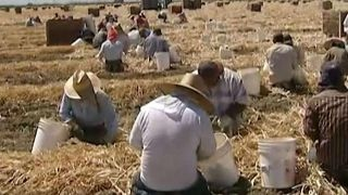 Labor shortage drives up farm wages, could hike food prices
