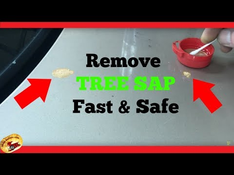 How To Remove TREE SAP, TAR & GLUE in Seconds AMAZING !!