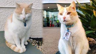 Бездомный кот каждый день сидел у входа в больницу и тогда медики придумали ему особую должность