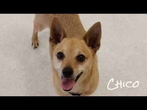 Meet Chico! #86515