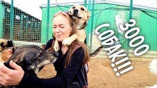 Собака налетела и заобнимала! ПРИЮТ в Москве.