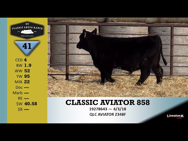 Classic Angus Ranch Lot 41