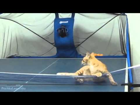 Funny Cats Compilation Part 5