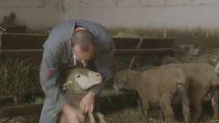 Interview Métiers - Lionel, éleveur d'ovins
