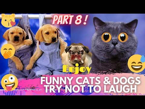 🤣 It's TIME for SUPER LAUGH! 🤣FUNNY CATS & DOGS🙀🐶BEST FUNNY MOMENTS PART 7 🤪 | TRY NOT TO LAUGH 🤭