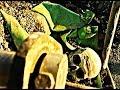 Arka Sokaklar - Kazıdan Çıkan Kafatasının Gizemi