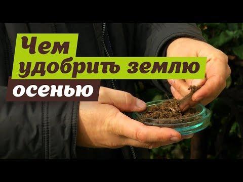 Осенние удобрения для почвы. Советы специалиста.