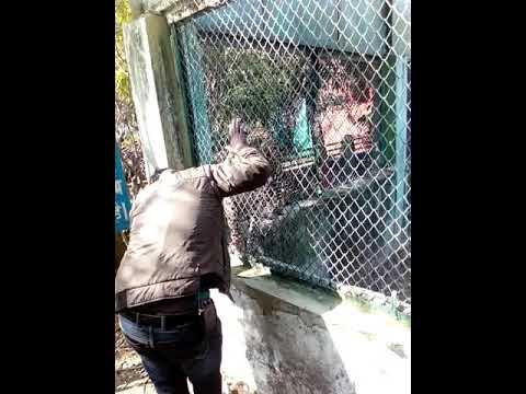 BH Gecu boys at Indore zoo