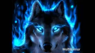 Video Wolf Pictures ❤ download MP3, 3GP, MP4, WEBM, AVI, FLV Juni 2018