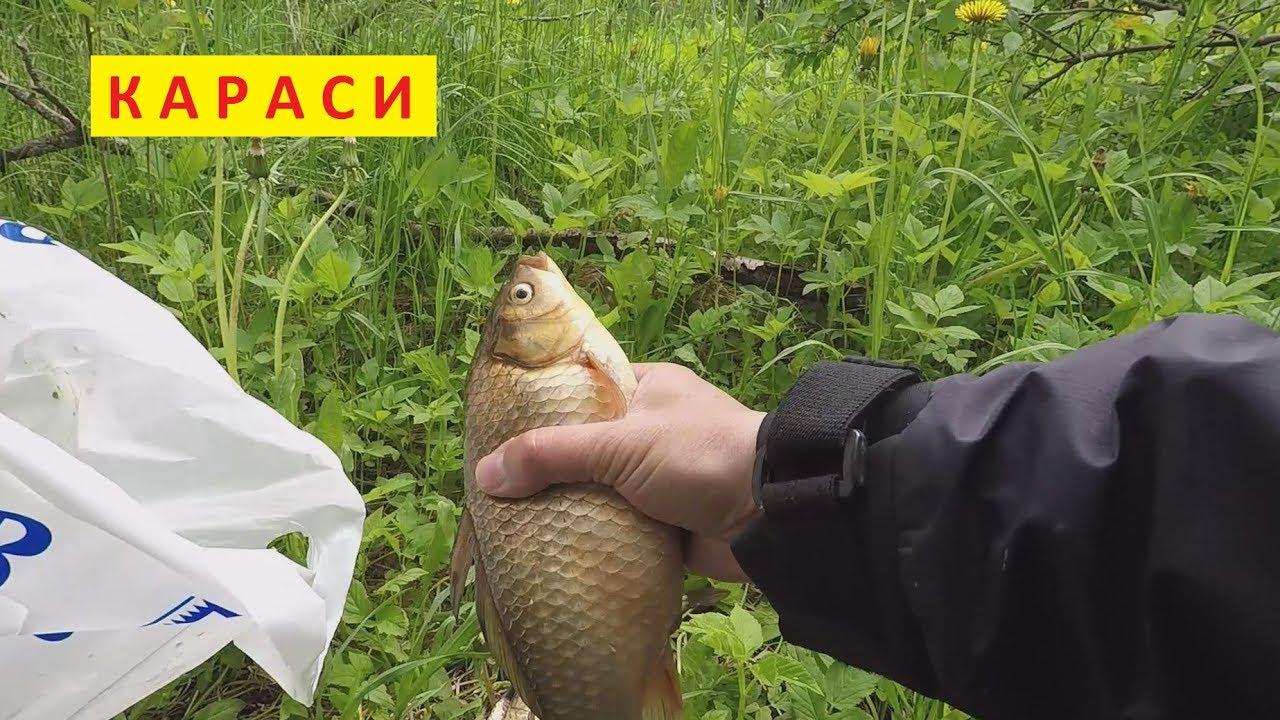 рыбалка на карася поплавочной удочкой май