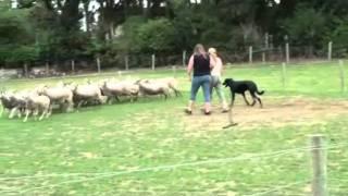Jag et les moutons part1