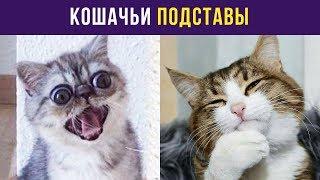Приколы с котами. Кошачьи подставы | Мемозг #6