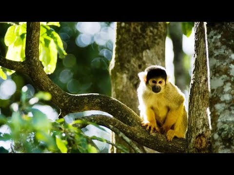 Best Places to Visit in French Guiana