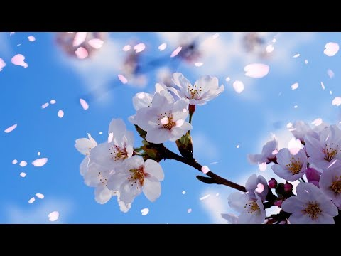 """Peaceful Instrumental music, Relaxing music """"Perfect Blossom"""" by Tim Janis"""