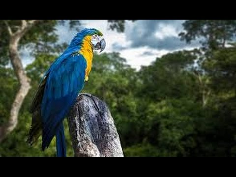 Rainforest Documentary 2017 - Totally Tropical Rainforest