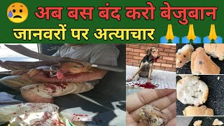 कुत्तों पर अत्याचार बंद करो !! Stop Attack on Dogs !!
