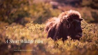A Short Wildlife Film