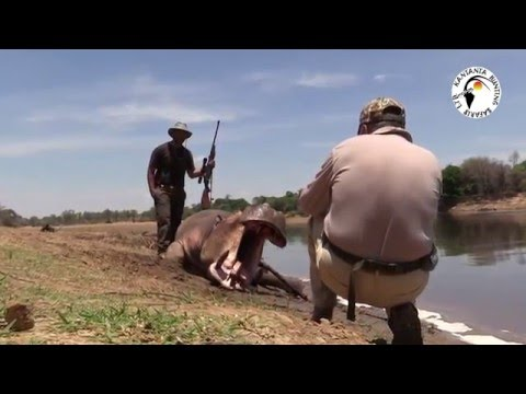 ZAMBIA - KANTANTA HUNTING SAFARIS -CROC & HIPPO HUNT - BIG GAME HUNTING - STEP FIVE