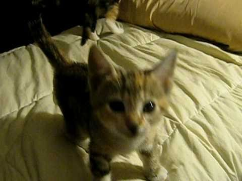 Cute Kittens Crying III