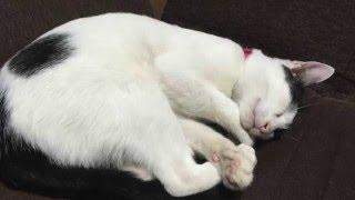 白黒ネコのプチ太郎君の紹介です.