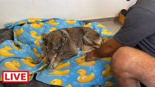 I took the old blind dog in my house so I can make him feel better as soon as possibleTakis shelter