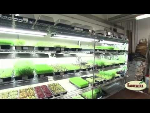 Greens and Gills – Indoor aquaponics farming