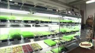 Greens and Gills - Indoor aquaponics farming