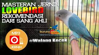 Gambar cover Masteran Walang Kecek Jernih 100%, Rekomendasi Dari Sang Ahli.