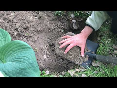 Köp INTE jord -om du har det här i din trädgård - Lerjord