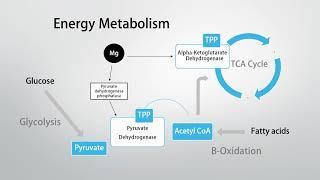 Magnesium Intolerance? Consider Thiamine (Vitamin B1)!