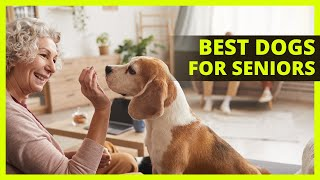 BEST COMPANION DOGS FOR SENIORS | Top 10 dog breeds best suited for senior owners