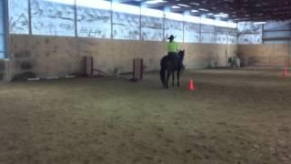 14. Brenda & Zip Horsemanship Fuzzy Fun on Film Video Horseshow