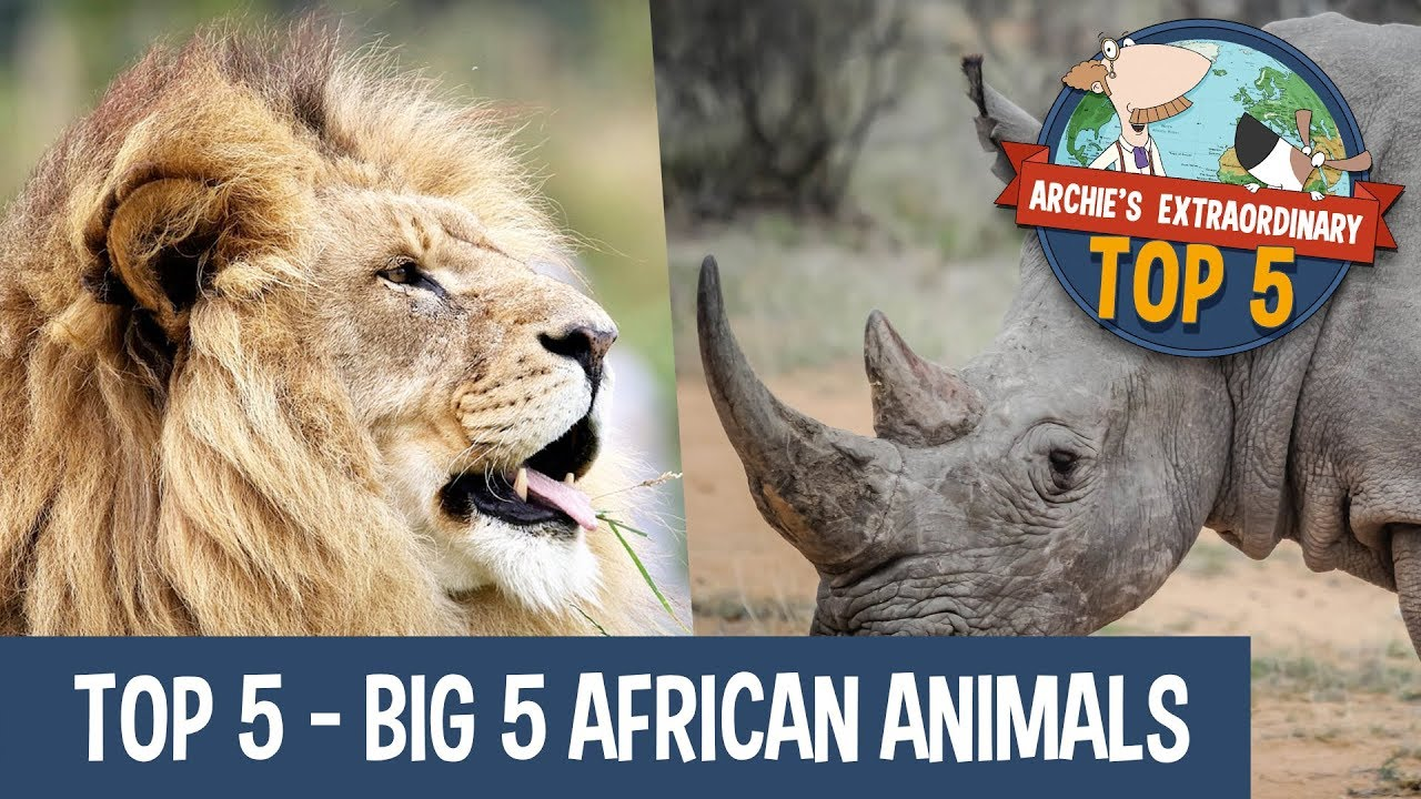 Big5 African Animals | Archie's Extraordinary Top 5