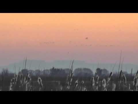 Sunrise at Sacramento National Wildlife Refuge